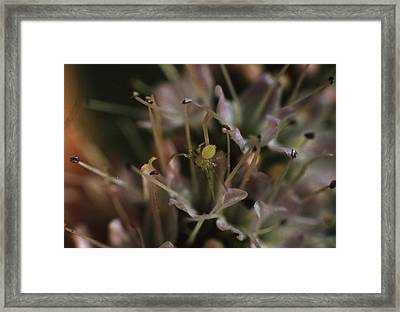 Spider In A Peppermint Flower Framed Print by Retro Images Archive