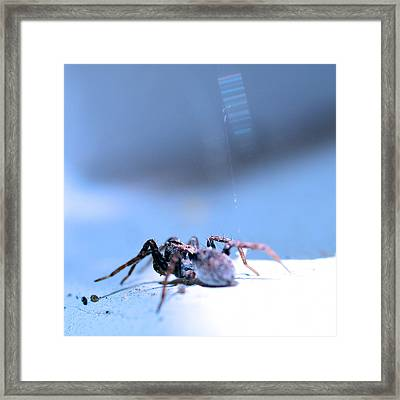 Spider In Blue Tone Framed Print by Tommytechno Sweden