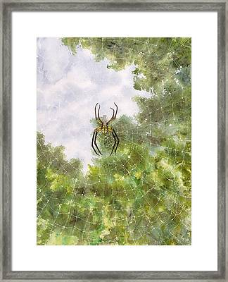 Spider In Web #2 Framed Print