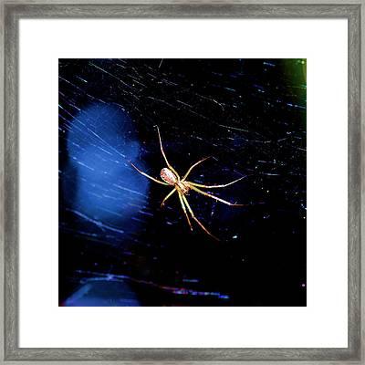 Spider In Web Framed Print
