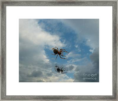 Spider Framed Print by Jane Ford