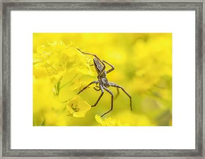 Framed Print featuring the photograph Spider by Jaroslaw Grudzinski