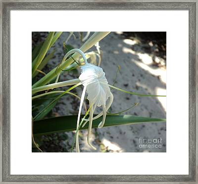Framed Print featuring the photograph Spider Lily2 by Megan Dirsa-DuBois