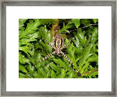 Framed Print featuring the photograph Spider Making Web by Belinda Lee