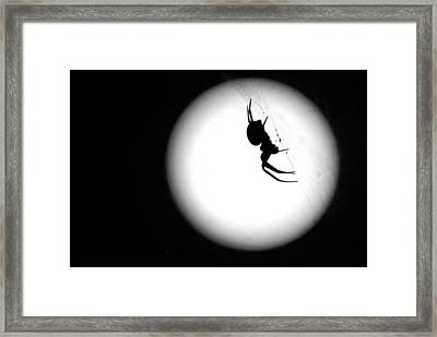 Spider Moon Framed Print