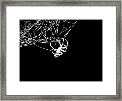 Framed Print featuring the photograph Spider by Natasha Denger