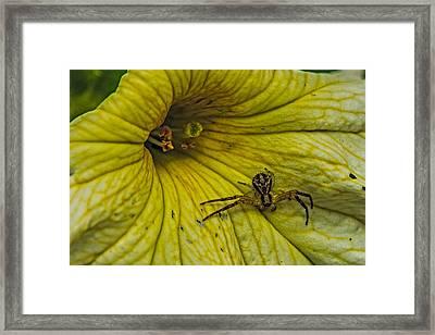 Spider On A Liliy Framed Print