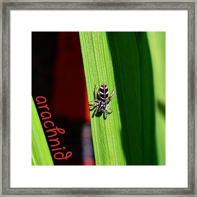 Spider On Green Leaf Framed Print by Tommytechno Sweden