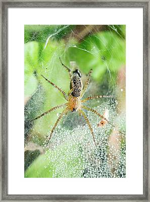 Spider On Its Web Framed Print