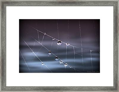 Spider Pearls Framed Print by Michaela Preston