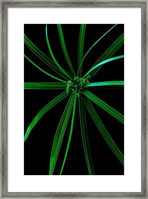 Spider Plant Framed Print