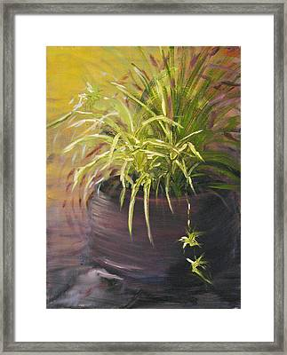 Spider Plant Framed Print by Sherry Robinson