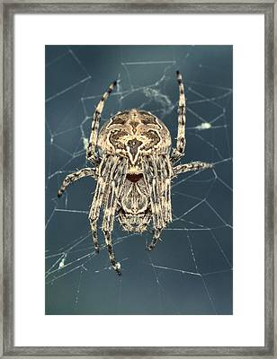 Spider Framed Print by Sinclair Stammers/science Photo Library
