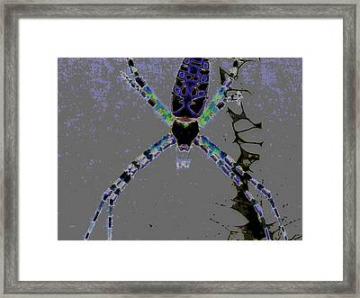 Spider Spider On The Wall Framed Print by Rebecca Flaig