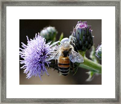 Spider Surprise Framed Print