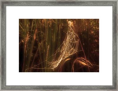 Spider Web A Framed Print by Jim Vance