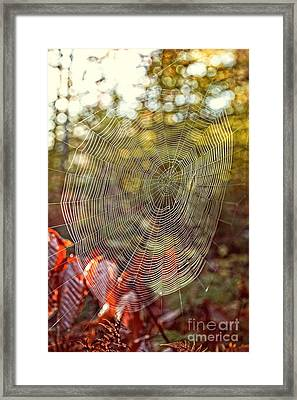Spider Web Framed Print by Edward Fielding