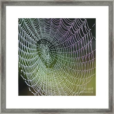 Spider Web Framed Print by Heiko Koehrer-Wagner