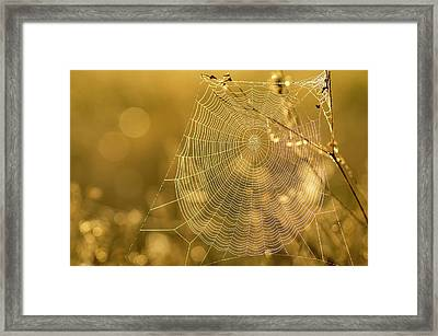 Spider Web, Indiantown, Florida Framed Print by Rob Sheppard