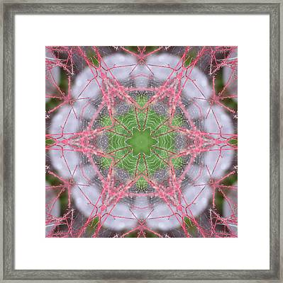 Spider Web On Smokebush Framed Print