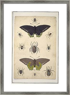 Spiders And Butterflies, Artwork Framed Print by Science Photo Library
