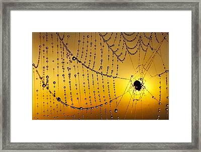 Spiders Heaven Framed Print