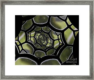 Spider's Web. Framed Print by Clare Bambers