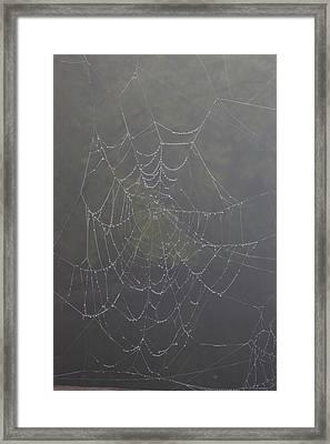 Spiderweb Framed Print by Allan Morrison