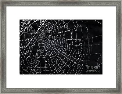 Spiderweb With Dew Framed Print