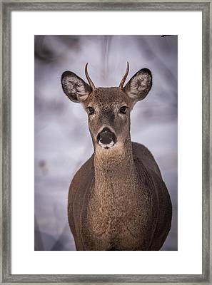 Spike Buck Framed Print