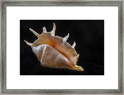 Spike Framed Print by Jean Noren