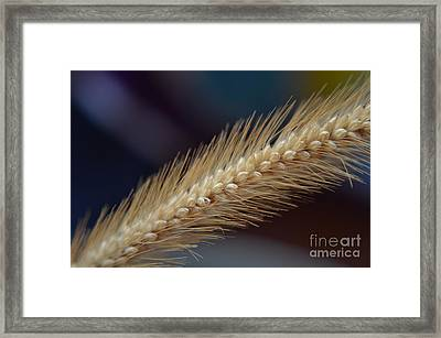Spike Framed Print by Michelle Meenawong