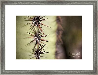 Spike On Guard Framed Print