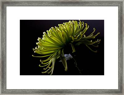Framed Print featuring the photograph Spike by Sennie Pierson