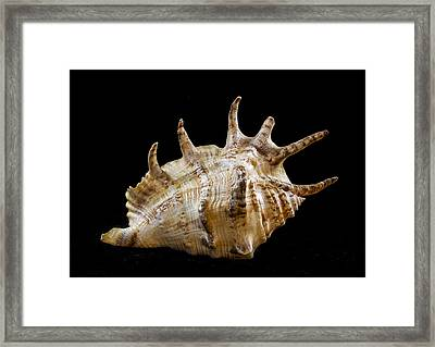 Spikes Back Side Framed Print by Jean Noren