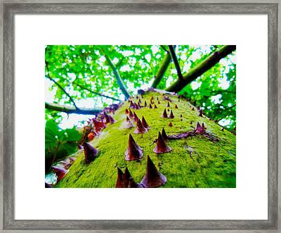 Spiketree Framed Print by William  Dorsett