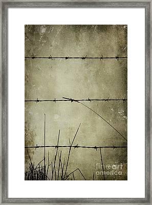 Spikey Wire Framed Print by Svetlana Sewell
