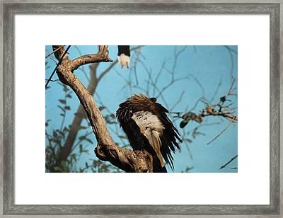 Spiky Bird Framed Print