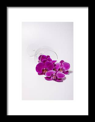 Phalenopsis Framed Prints