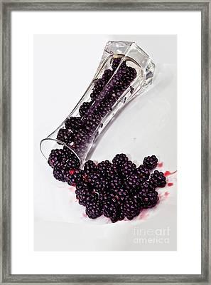 Spilt Blackberries Framed Print by Shirley Mangini