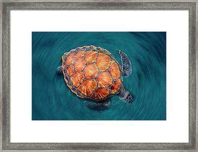Spin Turtle Framed Print