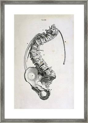 Spinal Curvature Framed Print by British Library