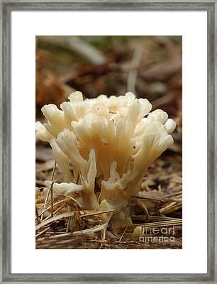 Spindle Mushroom Framed Print by Susan Leavines