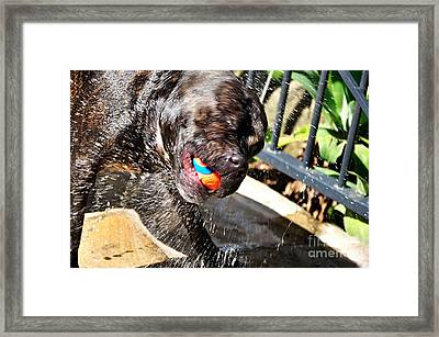 Spinning Out Framed Print by Kaye Menner