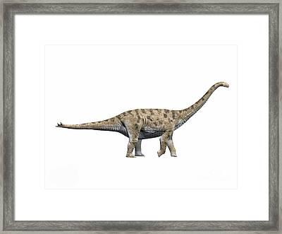 Spinophorosaurus Nigerensis, Middle Framed Print by Nobumichi Tamura