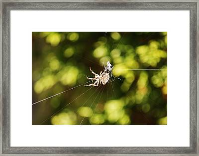 Framed Print featuring the photograph Spins A Web by Al Fritz