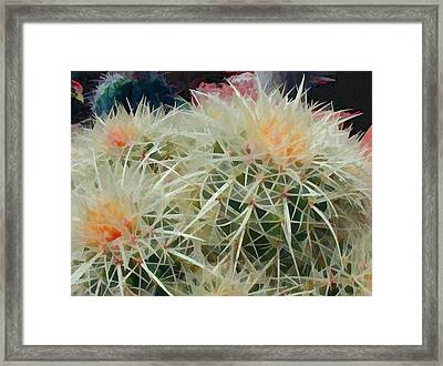 Spiny Barrel Cactus Framed Print by Elaine Plesser