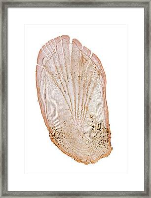 Spiny Goby Scale Framed Print