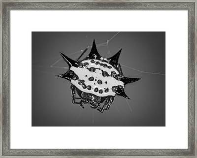 Spiny Orb  Framed Print