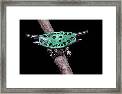 Spiny Orb-weaver Spider Under Uv Light Framed Print by Melvyn Yeo
